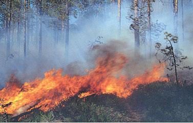 Изменение состава атмосферы и климата - Экология