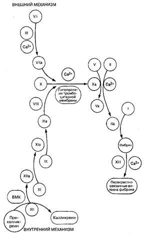 Механизм свертывания крови