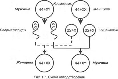 Сперматозоиды инактивируются
