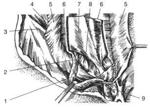хирургическая анатомия паховых грыж топографическая анатомия
