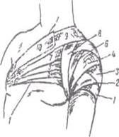 Когда и как накладывается колосовидная повязка на плечевой сустав