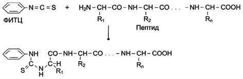 Определение аминокислотной последовательности в белке