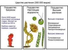 Низшие растения, или Водоросли