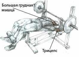 Комплекс упражнений для развития грудных мышц