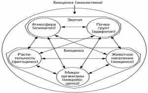 Общая характеристика экосистем