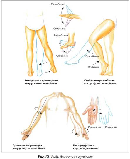 Плоскости вращения в суставах болит сустав ноги в коленке