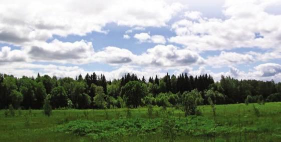 Виды растений Московской области