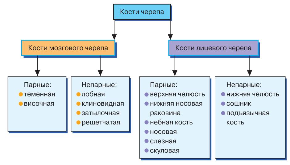 Кости основания черепа