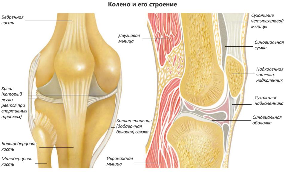 Трение в суставах эндопротезирование коленного сустава стоимость в иркутске