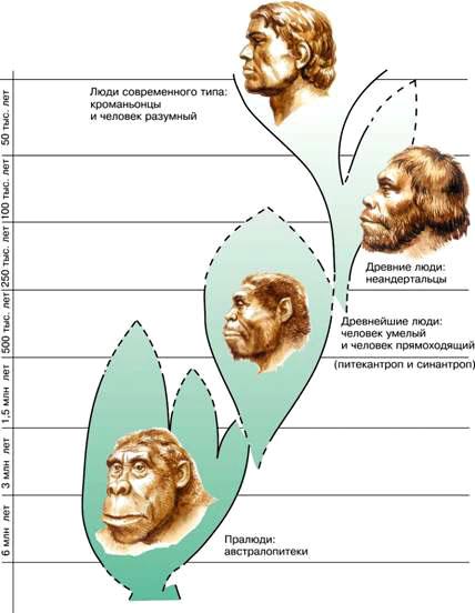 macroevolution of hominids essay