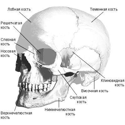 Почему болят кости скул