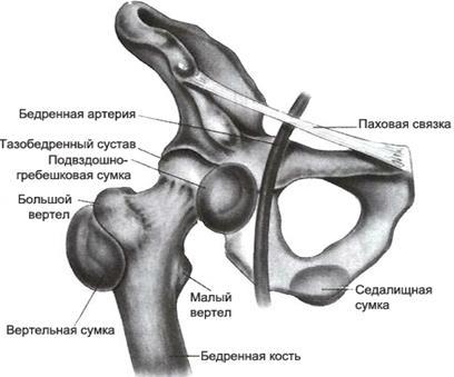 Техника проведения массажа отдельных частей тела народна медицина за лечение на акне
