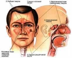 Заболевания носа, придаточных пазух