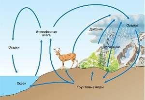 Учение о биосфере