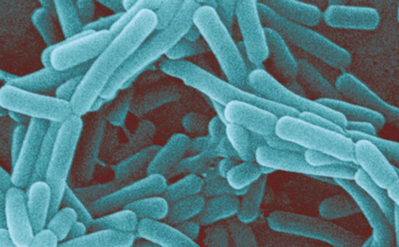 kishechnaya-bakteriya-vo-vlagalishe